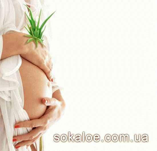 беременность и алоэ вера