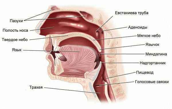 аллергия на алоэ симптомы
