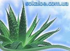 Растение Алоэ Вера