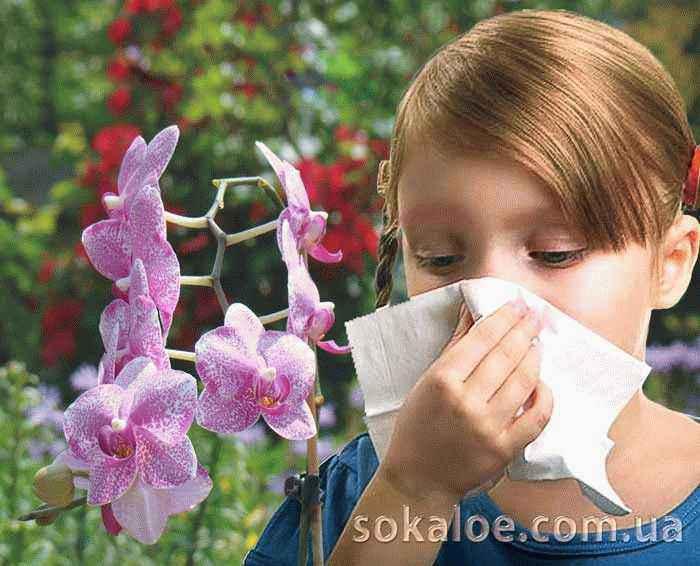аллергия, алоэ вера