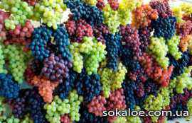poleznye-svojstva-vinograda-vinograd
