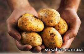 mozhno-li-est-kartoshku-pri-pohudenii-polza-kartoshki-kartofel