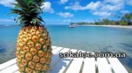 pohudet-ananas