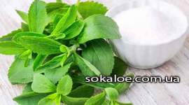 Trava-stevija-polza-i-vred-lechebnye-svojstva